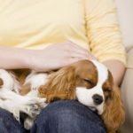 Wie Du Tiere mit der MIR-Methode behandelst